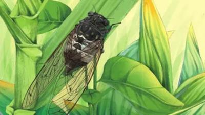 全国科普日 · 青图活动丨青图带你探索昆虫的世界